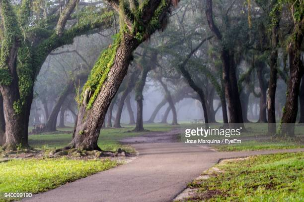 road amidst trees - coral gables stock pictures, royalty-free photos & images