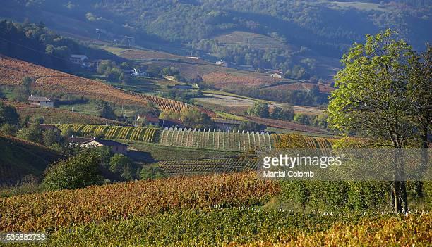 Road among vineyards in Beaujolais region