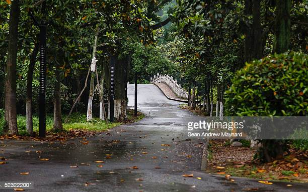 road and a bridge at wuhan botanical gardens - wuhan stock photos and pictures