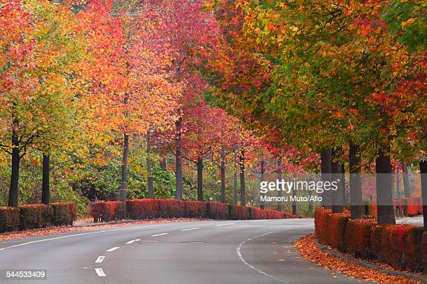 Road and Autumn leaves