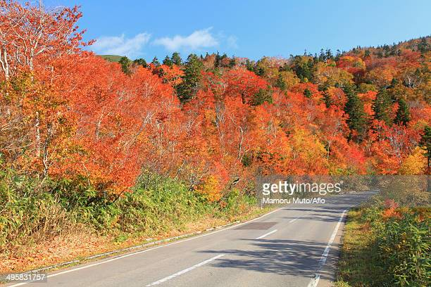 Road and Autumn trees, Japan