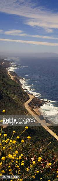 road and ocean with flowers in foreground - timothy hearsum stock pictures, royalty-free photos & images