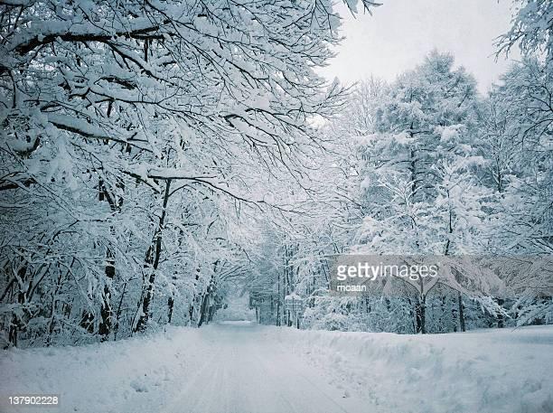 road and trees covered with snow - mutsu imagens e fotografias de stock