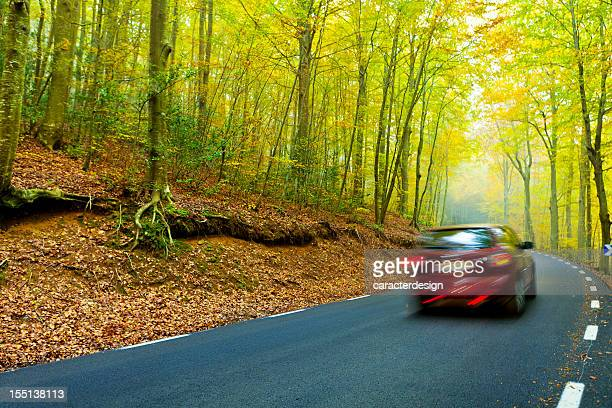Road at a beautiful forest in autumn