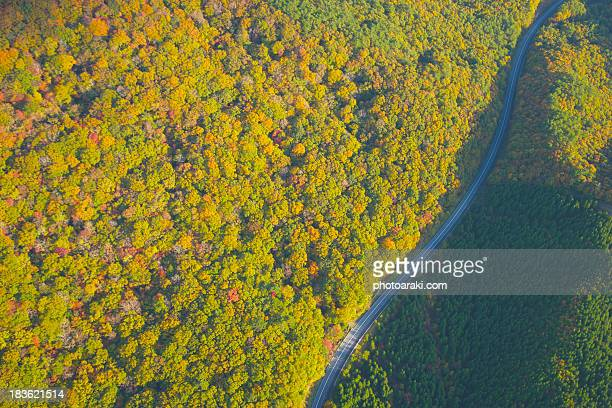 Road Autumn forest and Aerial View