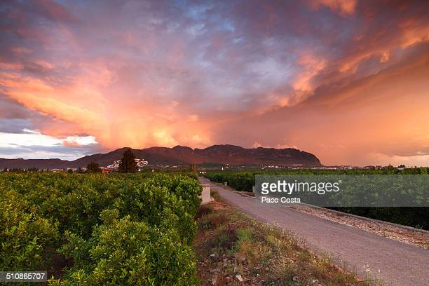 a road between an orange grove. - orange orchard stock photos and pictures