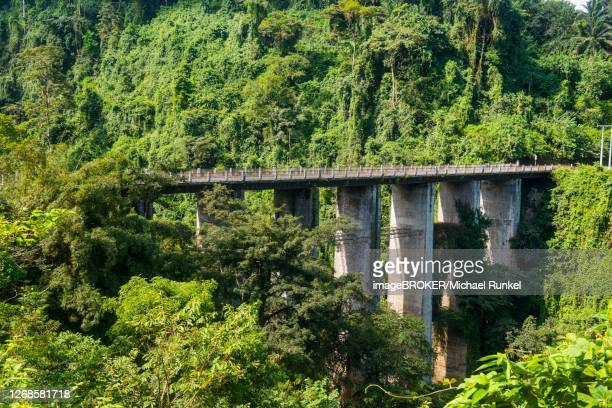 road bridge in the tropical jungle, bioko, equatorial guinea - equatorial guinea stock pictures, royalty-free photos & images