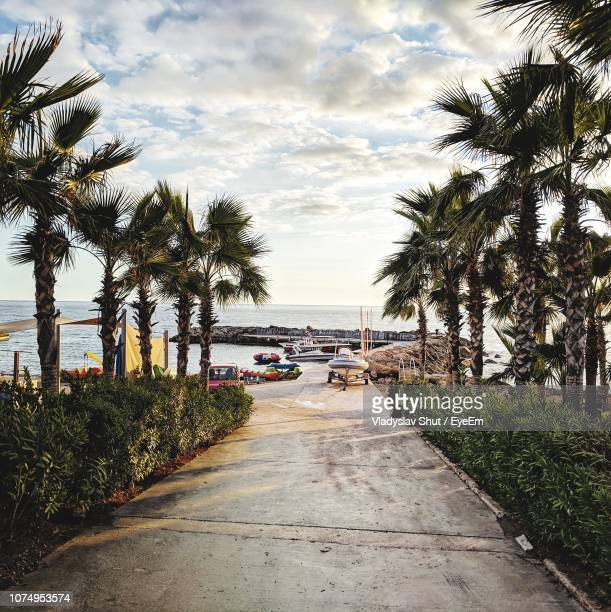 road by palm trees against sky in city - パフォス ストックフォトと画像