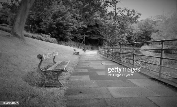 road by trees - morpeth stock pictures, royalty-free photos & images