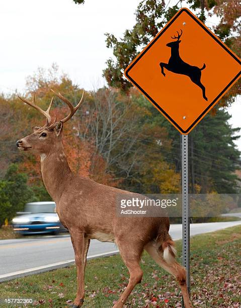 road crossing - animal crossing stock pictures, royalty-free photos & images