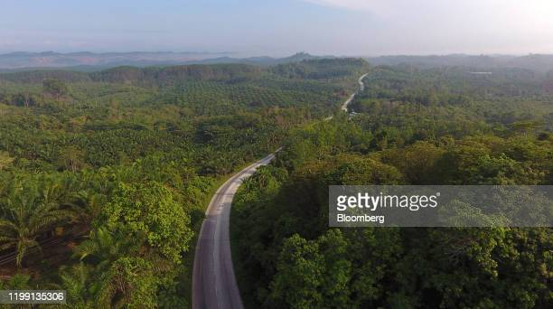 Road cuts through palm plantations and rainforest in this aerial photograph taken over the Penajam area of East Kalimantan, Borneo, Indonesia, on...