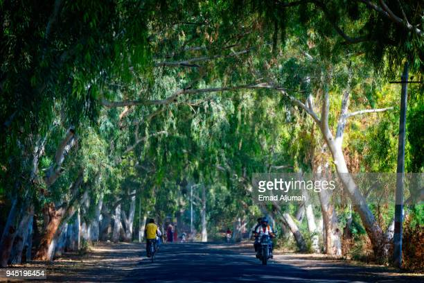 road from udaipur to jodhpur, rajasthan, india - ranakpur temple stock photos and pictures