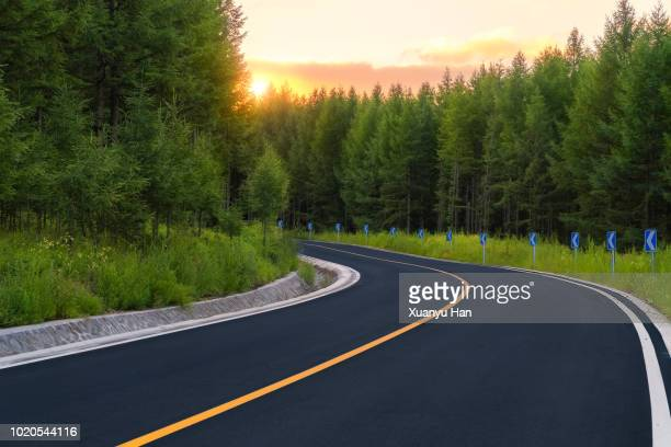Road going through Forest at sunset