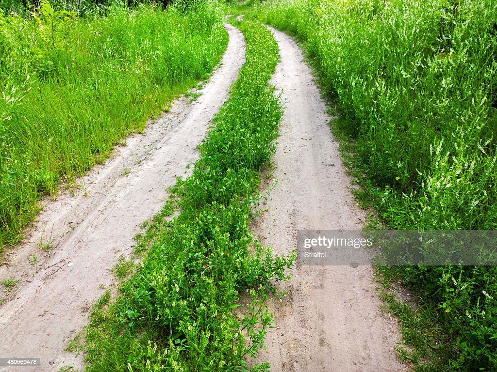 Road in a field. : Stock Photo