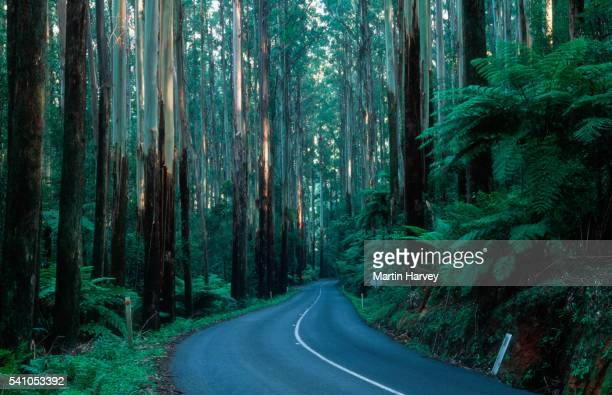 Road in Dense Australian Forest