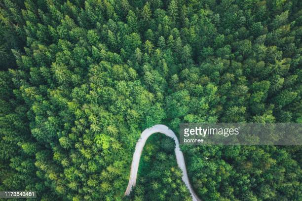 road in forest - nature alphabet letters stock pictures, royalty-free photos & images