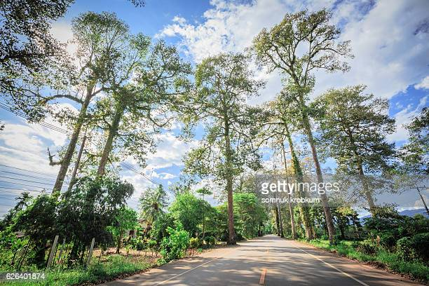 road in forest - skyline drive virginia stock photos and pictures