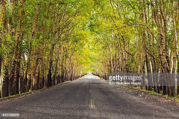 road in forest - boulevard stock pictures, royalty-free photos & images
