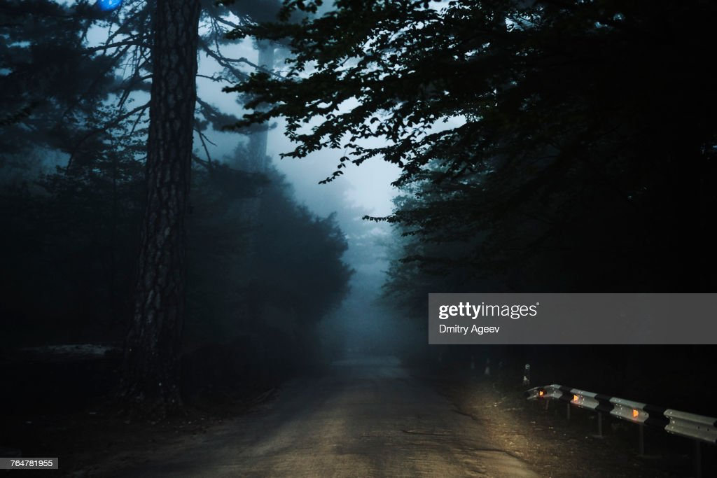 Road in forest : Stock Photo