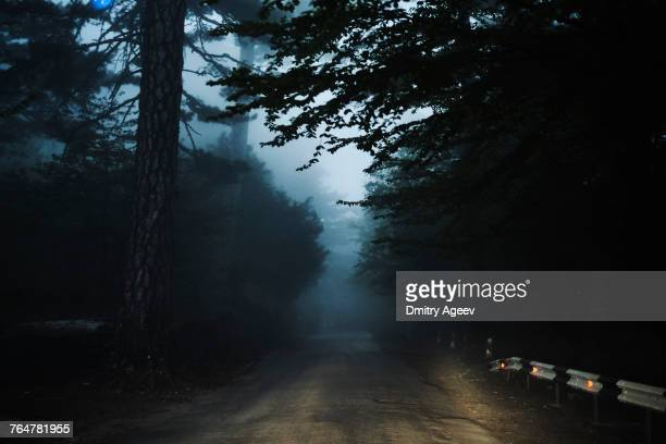 road in forest - nebel stock-fotos und bilder