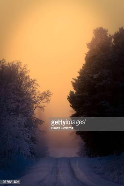 road in forest, swede - nabo sueco fotografías e imágenes de stock