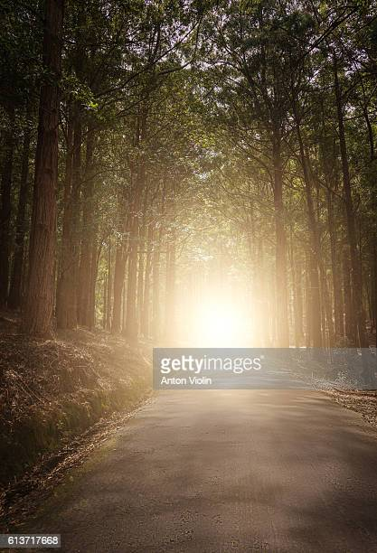 Road in forest with distant light