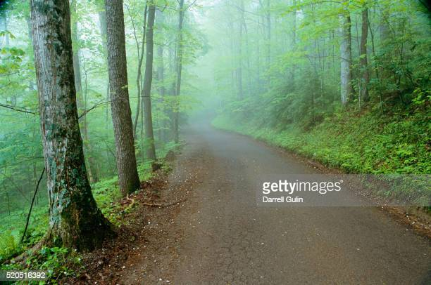 road in great smoky mountains national park - roaring fork motor nature trail stock pictures, royalty-free photos & images