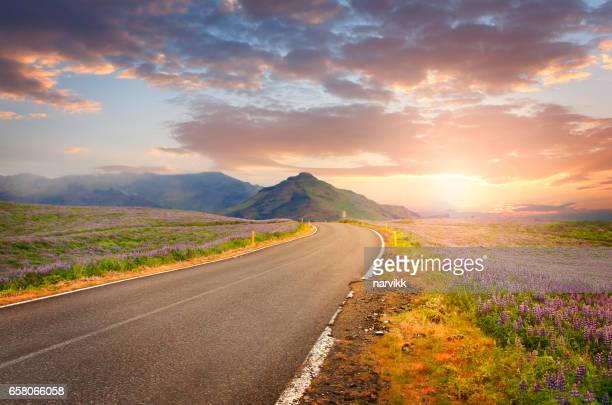 Road in Iceland in sunset light