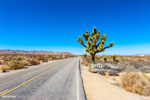 Road in Joshua Tree National Park