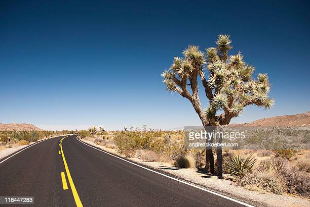 Road in Joshua Tree National