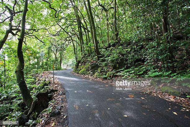 Road in lush forest, Hana, Maui, Hawaii