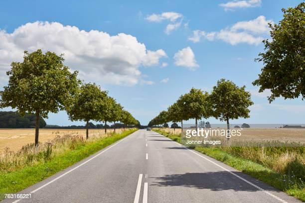 road in rural area - avenue stock pictures, royalty-free photos & images