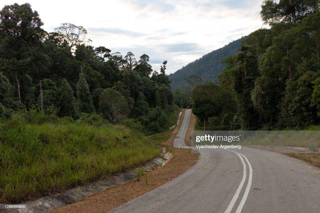 Road in the forest, Maliau Basin, Borneo, Malaysia : Stock Photo