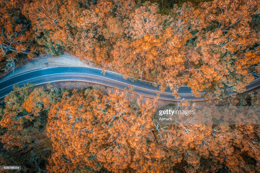 Road in the middle of forest in Australia : Stock Photo