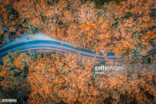 road in the middle of forest in australia - horizontal stock pictures, royalty-free photos & images