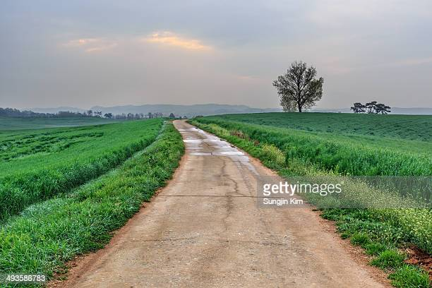 A road in the middle of the field