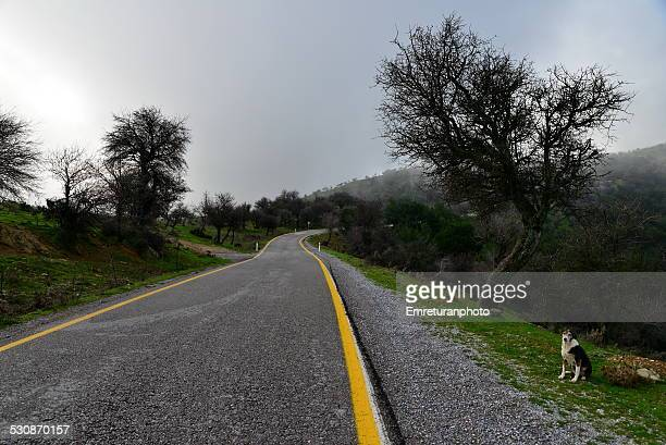 road in the mountain and the dog - emreturanphoto stock pictures, royalty-free photos & images