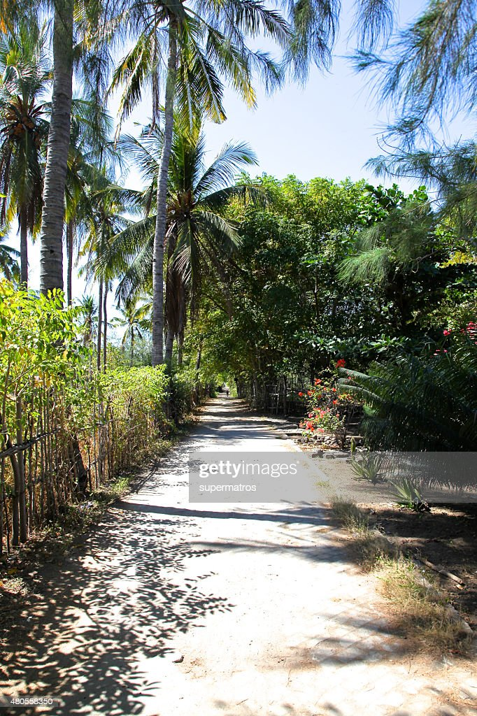 road in the rainforest on the island of Gili Meno : Stock Photo