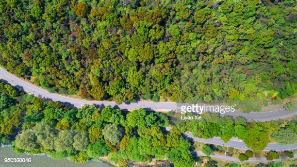 road in the summer forest aerial view - liyao xie stock pictures, royalty-free photos & images