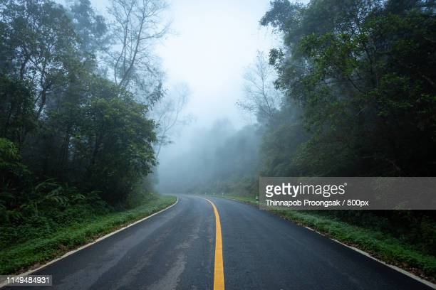 road in with nature forest and foggy road of rain forest - boulevard stock pictures, royalty-free photos & images
