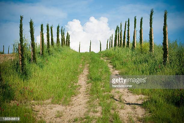 Straße in grüner Landschaft, Himmel im Hintergrund.