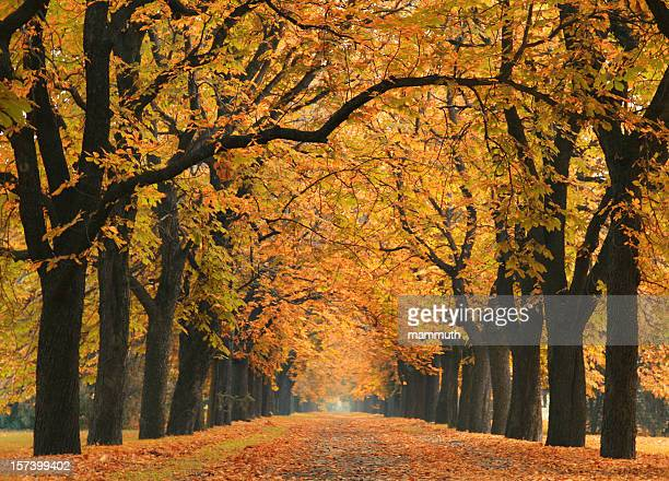 road into the autumn - boulevard stock pictures, royalty-free photos & images