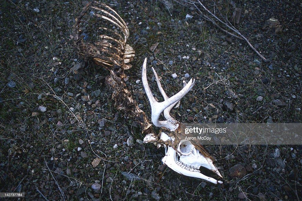 Road kill bones : Stock Photo