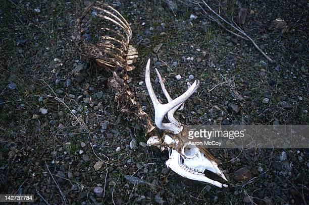 road kill bones - animal skeleton stock photos and pictures