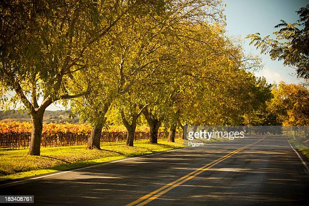 road lane in napa valley, california - sonoma county stock pictures, royalty-free photos & images