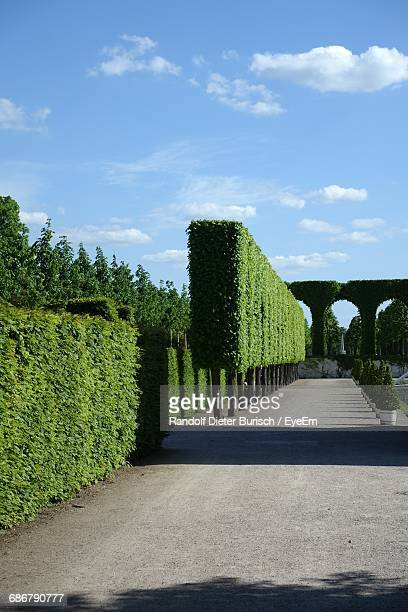 road leading in park during sunny day - topiary stock photos and pictures