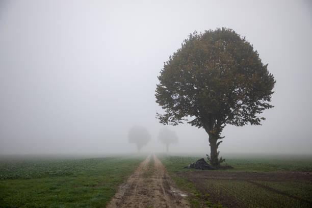 Road leading into dense fog, Lyss, Bern, Switzerland