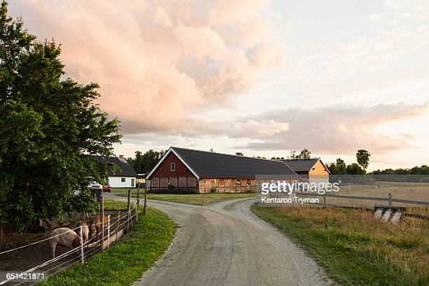 road leading towards barn against sky at farm - farmhouse stock pictures, royalty-free photos & images