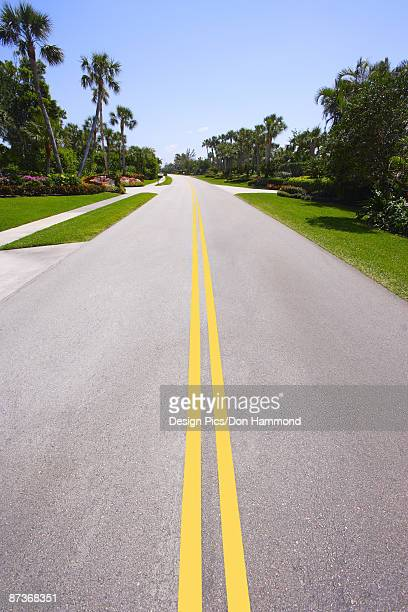 Road lined with palm trees