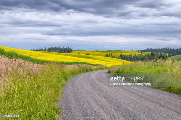 Road near Rapeseed field in Palouse, Eastern Washington State